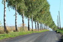 Road with trees Stock Images