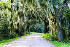 Road with trees overhanging with spanish moss in Southern USA. Royalty Free Stock Photos