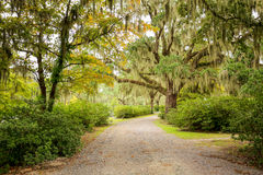 Road with trees overhanging with spanish moss in Southern USA royalty free stock photo