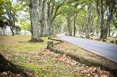 Road among trees in a park stock image