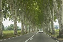 Road and trees. Picture of a road in France with a beautiful alignment of mature trees on each side of it, creating a tunnel of green leaves and grey trunks Stock Photos