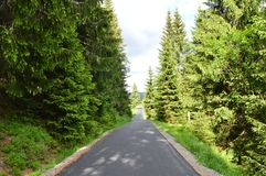 Road between trees stock images