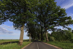 Road. The road with trees on a roadside Royalty Free Stock Images