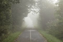 Road with trees at the sides in mist Royalty Free Stock Photo