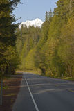 Road and trees and snow capped mountain. Stock Image