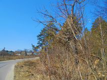Road and trees in spring clear day. royalty free stock photography