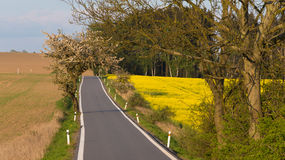Road with trees in spring. Rural countryside landscape Royalty Free Stock Photo