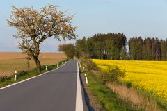 Road with trees in spring. Rural countryside landscape Stock Photo
