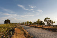 Road and trees during sunset Royalty Free Stock Photo