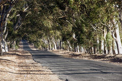 Road between the trees. Tarred road between the trees Royalty Free Stock Image