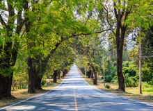 Road between the trees Royalty Free Stock Images