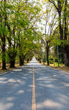 Road between the trees Royalty Free Stock Photos