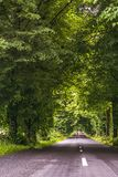 Road among trees. Travel by car, a beautiful road surrounded by old green trees. royalty free stock photos