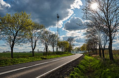 The road between the trees. The road between the trees under the blue sky with white clouds Stock Photos