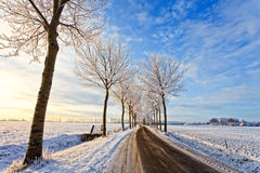 Road with trees in a white winter landscape Royalty Free Stock Photos