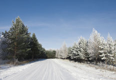 Road on trees in winter Royalty Free Stock Image