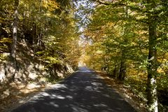 A road among the trees. And the wonderful colors of autumn stock photography