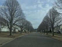 Winter Trees in Neighborhood royalty free stock photos
