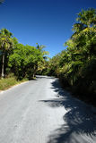 Road Through Tropical Forest. A road lined with tropical palm trees and plants on a bright, sunny day...shot on a caribbean island Stock Photos
