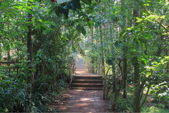 Road in tropical forest Stock Photos