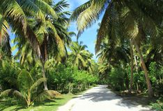 Road in tropical garden Royalty Free Stock Photography