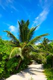 Road in a tropical hotel Royalty Free Stock Image