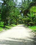 Road in tropical jungle Royalty Free Stock Image