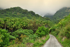 A road in the tropical rain forest, Taiwan Royalty Free Stock Image