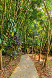 Road in tropical rainforest - jungle Royalty Free Stock Photography