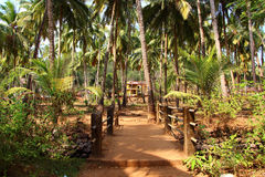 Road in the tropics. India. Goa Stock Photo