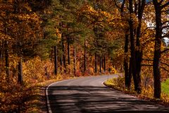 Road trough autumn colored woods. royalty free stock image