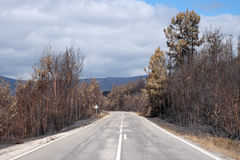 Road trough Burnt Forest Stock Photos