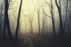 Road trough dark enchanted forest Royalty Free Stock Photography