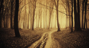 Road trough a dark forest with fog Stock Photos