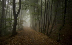 Road trough the dark forest Royalty Free Stock Image