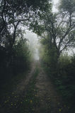Road trough dark mysterious forest with fog on Halloween Stock Image