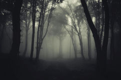 Road trough dark mysterious haunted forest Royalty Free Stock Images
