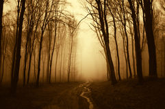 Road trough a dark scary surreal forest with fog Stock Image