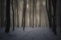 Road trough an enchanted forest on Christmas morning Royalty Free Stock Images