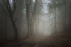 Road trough ethereal forest with fog Stock Images