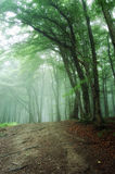 Road trough a green forest with fog. Vertical photo of a road going trough a green forest with fog Stock Photography
