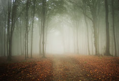 Road trough a mysterious forest with fog in autumn Stock Photo