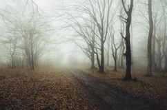 Road trough scary forest with fog in autumn Royalty Free Stock Photography