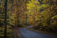 The road trough the woods in autumn Stock Photo