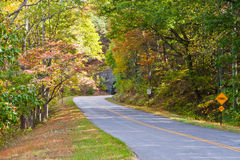 Road and a tunnel in autumn forest. Stock Images