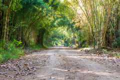 Road through tunnel of bamboo tree forest Royalty Free Stock Photography