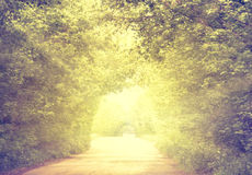 Road in tunnel of green trees Royalty Free Stock Photography
