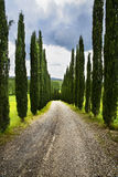 Road in the tuscan countryside. The typical cypresses and a road in the tuscan countryside Stock Images