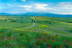 A Road Through Tuscany. A delighful track running through the hills of Pienza, Tuscany, Italy, with a field of poppies in the foreground.  This track was used Royalty Free Stock Photography