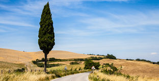 Road in Tuscany Stock Photos